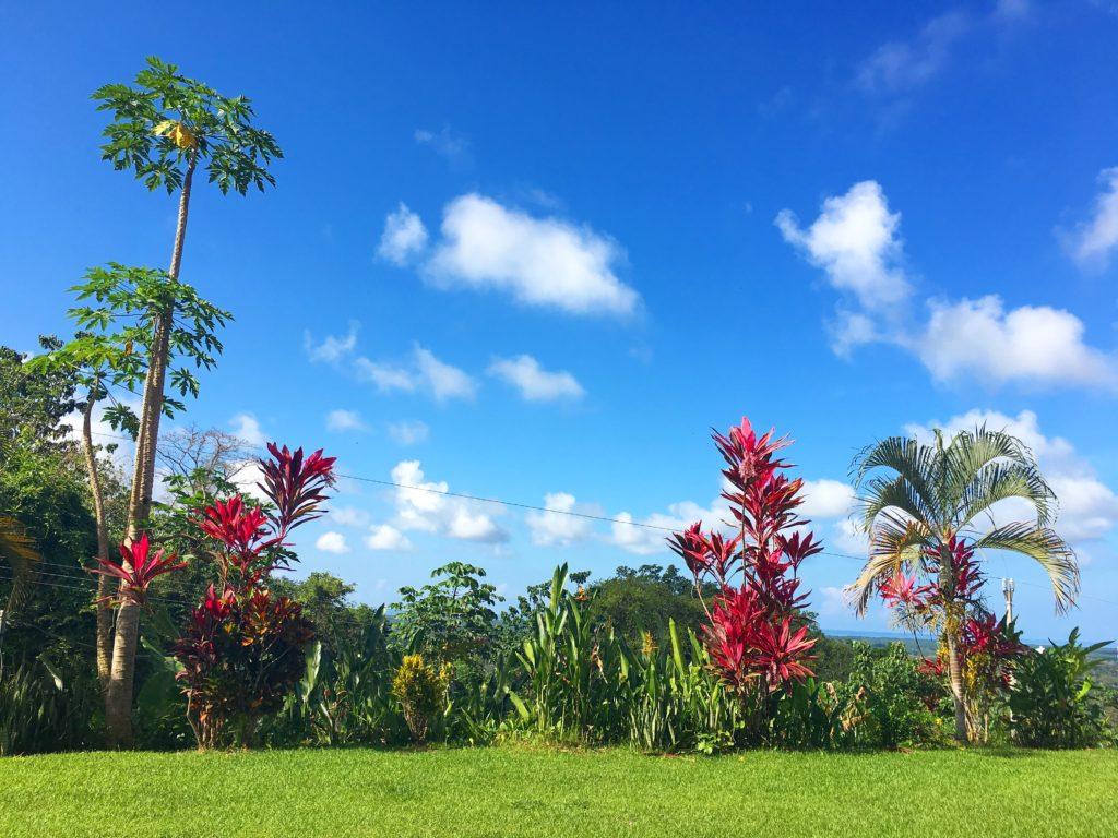 Costa Rica flowers